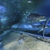 一度は行きたい世界の水族館ベスト10